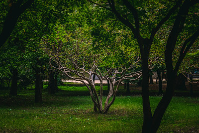 Smaller Tree in Middle of a Grove Illuminated by the Sun in Gyeongju South Korea