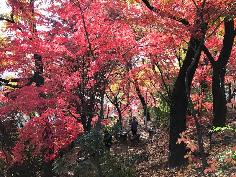 Smoke Break In Autumn