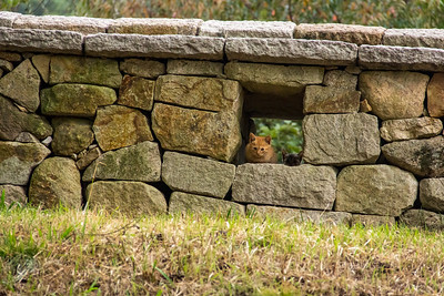 Kitten Peaking from an Opening in an Ancient Korean Wall