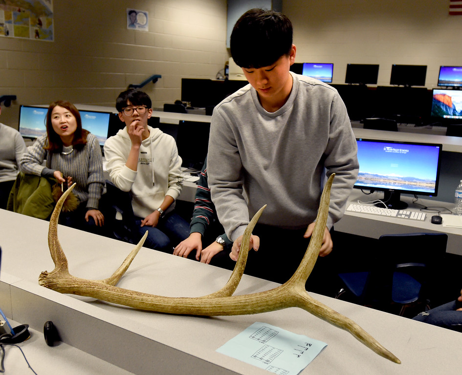 . Jae Hyeon Kim touches an elk horn during one of the classes. South Korean high school students  visited Westview Middle School in Longmont on Thursday as part of NASA\'s GLOBE Program. Cliff Grassmick  Photographer January 11, 2018