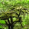 Humbug State Park