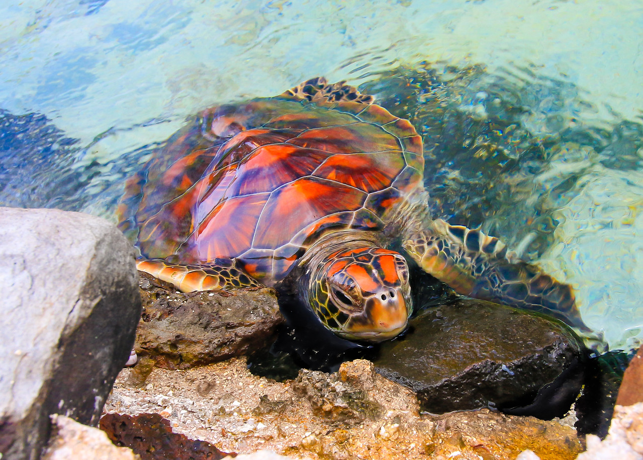 Turtle%20%281%20of%201%29-X2.jpg