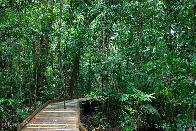 Daintree Rainforest, North Queensland