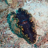 "Giant Clam at Lighthouse Bommie, <a target=""NEWWIN"" href=""http://en.wikipedia.org/wiki/Great_Barrier_Reef"">Great Barrier Reef</a>, Australia"