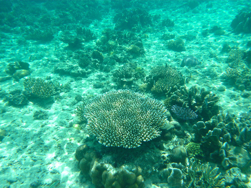 Live coral at Moon Reef