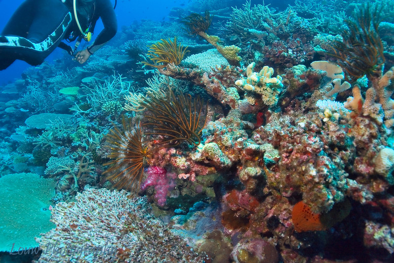 Scuba diving at the Somosomo Straits, Taveuni, Fiji