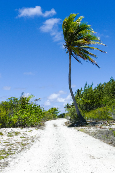 Lonely road in Fakarava