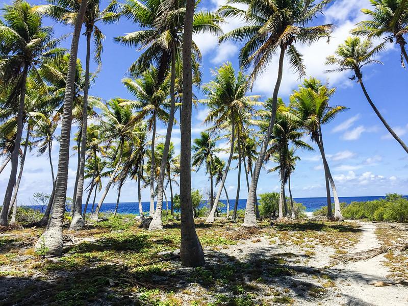 Fakarava coconut grove