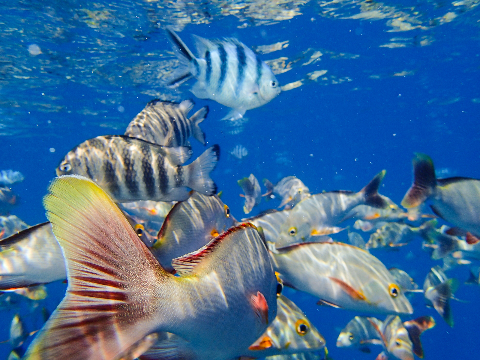 Orange, blue and yellow fish in Rangiroa lagoon