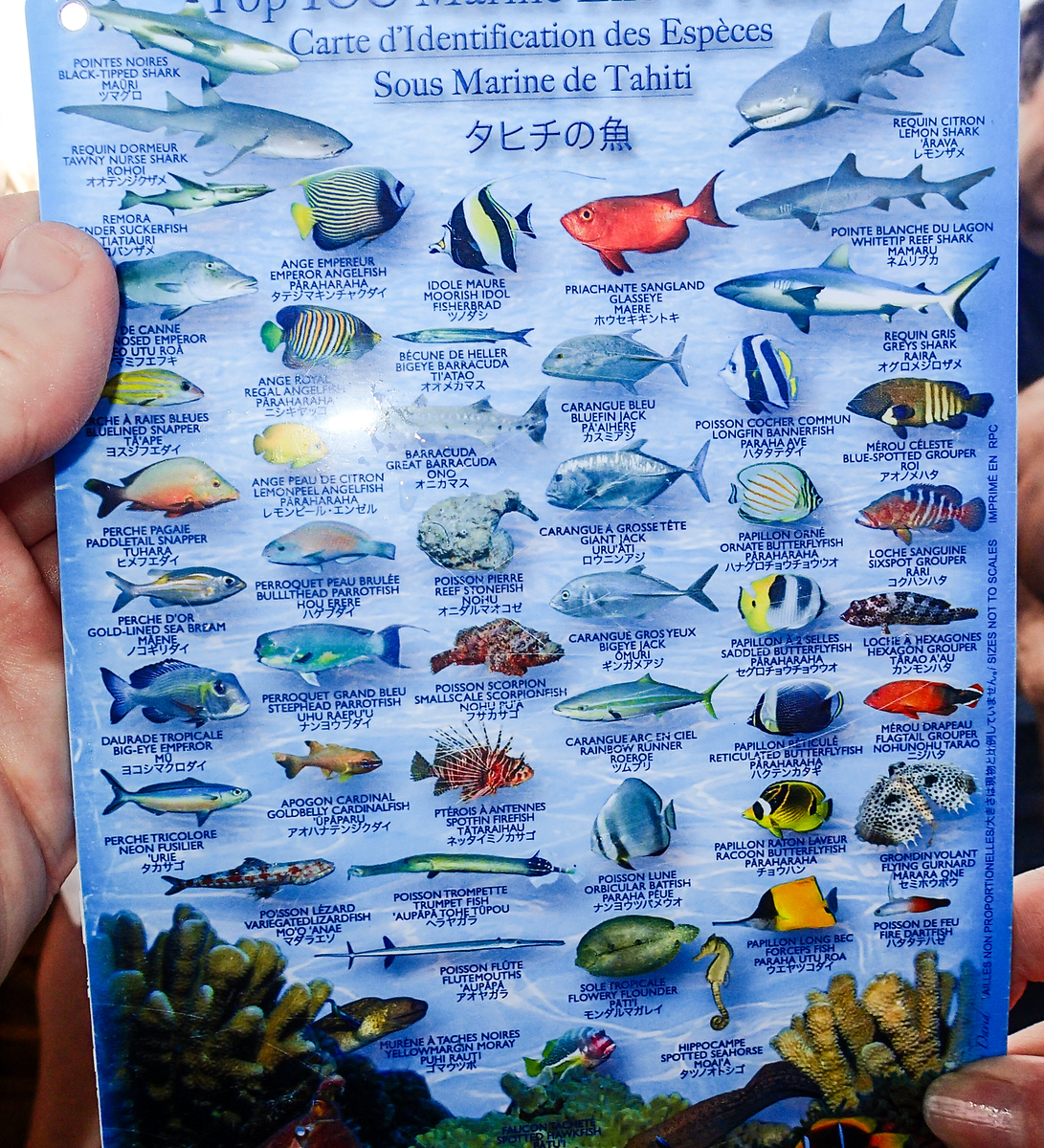 A chart helps identify what we've seen on a Rangiroa snorkeling excursion with Silversea.