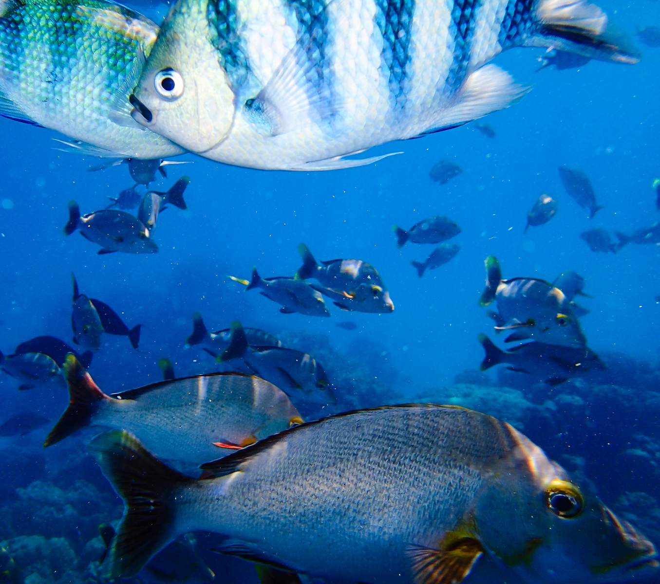 Colorful fish in the Rangiroa lagoon.