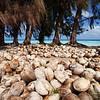 Coconuts, Fakarava, French Polynesia