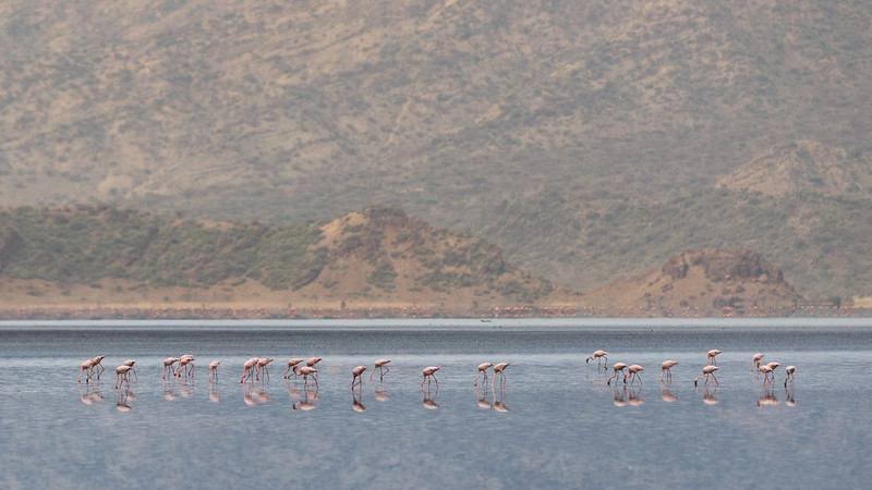 Flamingoes on Lake Natron