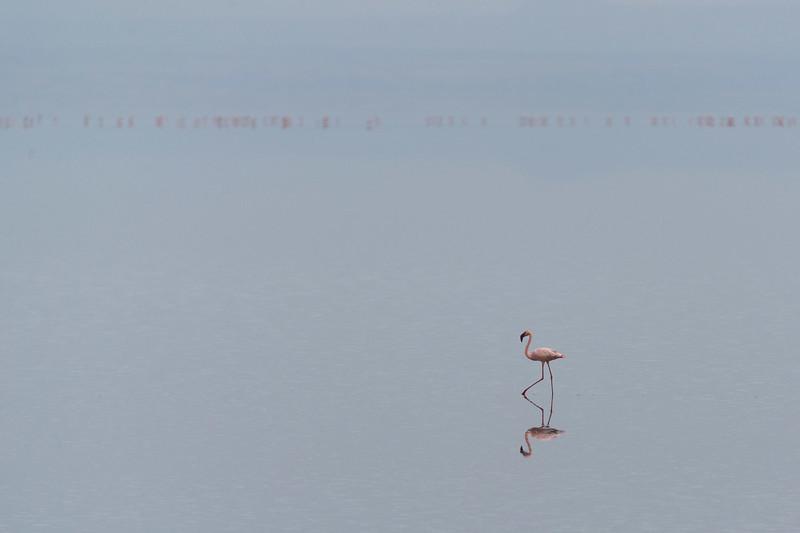 Flamingo on Lake Natron