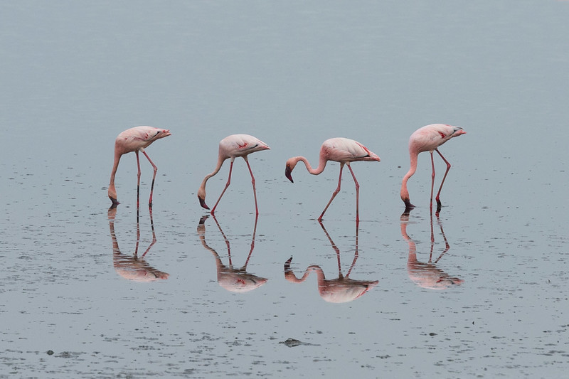 Flamingoes on Lake Natron