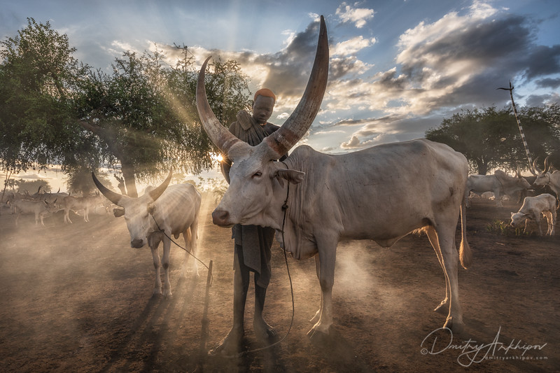 Mundari man and his cows