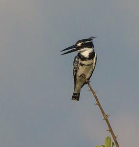 Wildlife at Ruaha, TZ