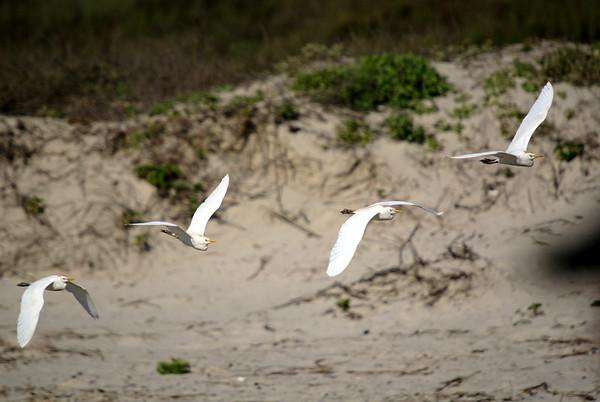 Padre Island National Seashore, TX
