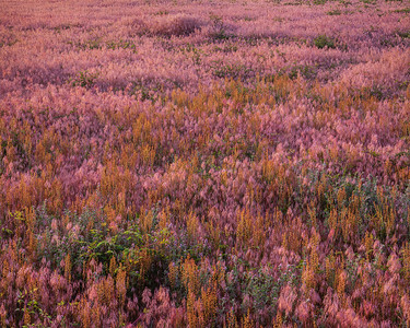 Grasses-4261
