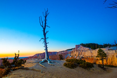 Bryce Canyon Inspiration Point Blue Hour