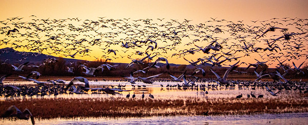 Bosque del Apache,  New Mexico
