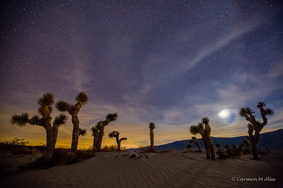 Joshua Tree Moon