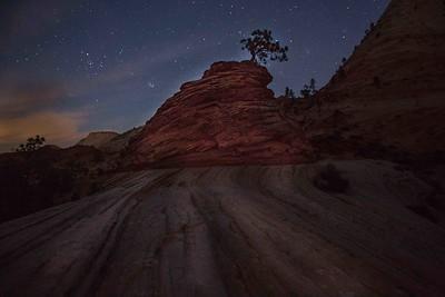 Lone Tree, Zion NP, Utah