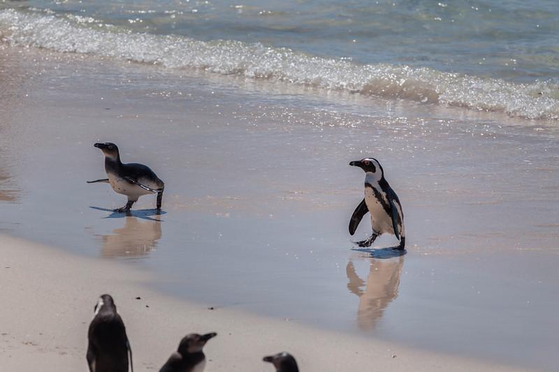 in Western Cape, South Africa