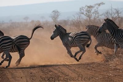 african wildlife favorites