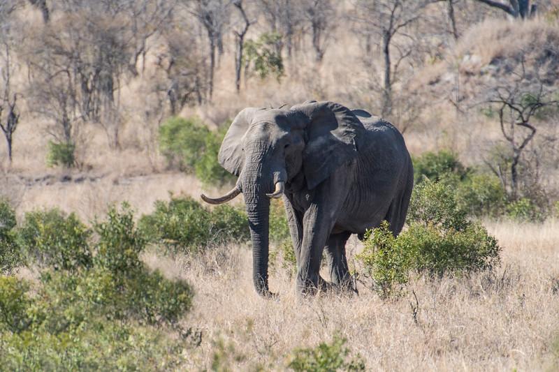 south africa, kruger national park, animals, mammals, ungulates, elephants