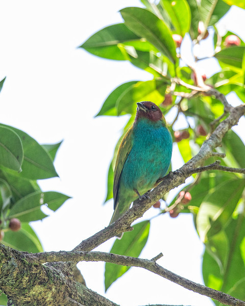 birds of Costa Rica + a few other animals