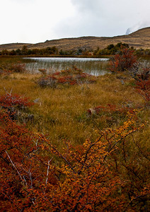 Beautiful fall colors along the road in Torres del Paine