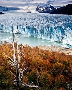 Perito Moreno glacier with fall colors