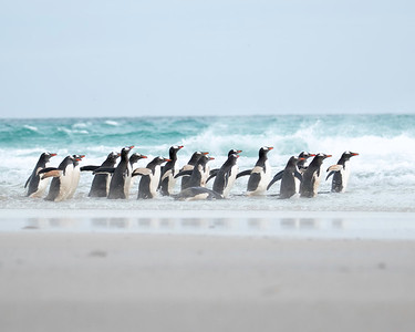 The life of the penguins may look likes it's just 'a day at the beach'