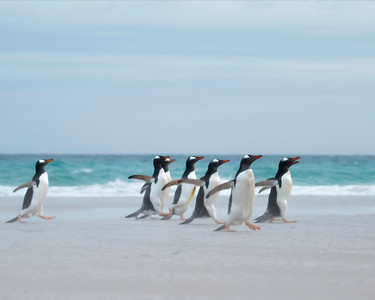 The Falkland Islands are famous for their many varieties of Penguins and other marine life