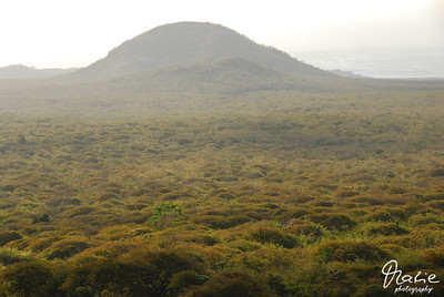 isla isabella galapagos