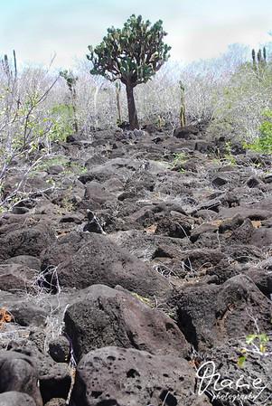 vulkangebiet sierra negra isla isabella galapagos
