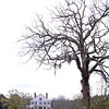 "Gravel Hill Plantation<br /> <br /> Gravel Hill Plantation is important not only as an example of Greek Revival architecture, but also as one of the few remaining plantations of the Buddenville area. In the first half of the nineteenth century Buddenville was a ""region inhabited by large planters and land owners where wealth, affluence, culture and high standards of living were reflected in palatial homes and surroundings. Gravel Hill is one of the few structures in the Buddenville area that was not destroyed during the Civil War. Gravel Hill is a two-story white frame Greek Revival structure set upon a raised basement. Benjamin Lawton Willingham constructed this one-time plantation between 1857 and 1859. A gable roof and a one-story portico, which is supported by four wooden square columns, characterize the front façade. Wooden balustrades both enclose and top the portico. A balustraded piazza with five small columns extends along the east façade. A raised terrace connecting the front portico and side piazza was added ca. 1900, and the foundation was enclosed with cement ca. 1955. Two small wings have also been added to the building. The property also includes a two-story frame smokehouse. Listed in the National Register May 28, 1976."