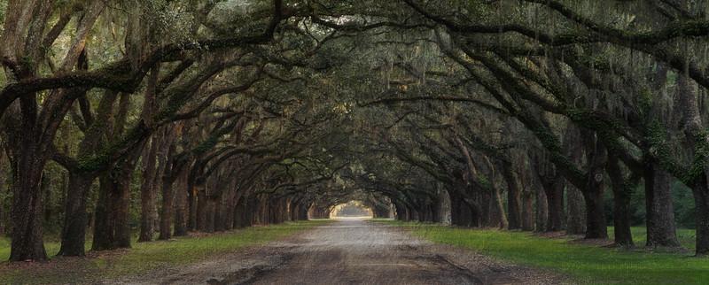 Live Oak Alley at Wormsloe Plantation, Savannah, GA-2