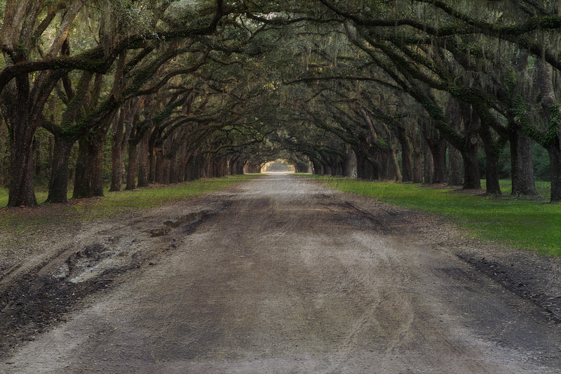 Live Oak Alley at Wormsloe Plantation, Savannah, GA