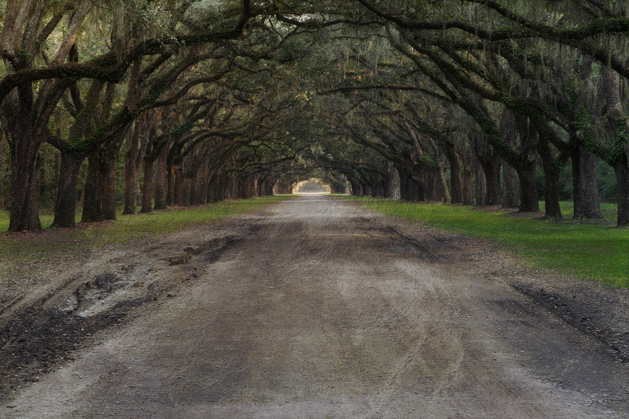 Live Oak Alley at Wormsloe Plantation, Savannah, GA