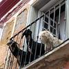 Dogs of Guanajuato