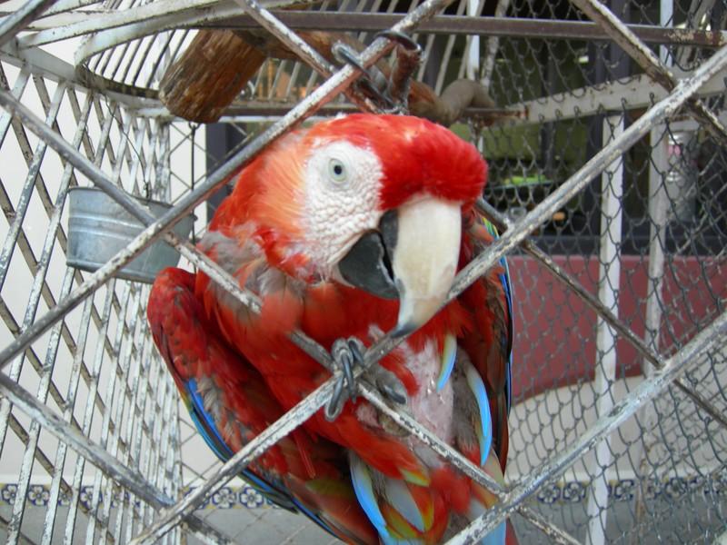 Feathered Friend - San Cristobal, MX