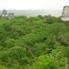 Tikal Forest