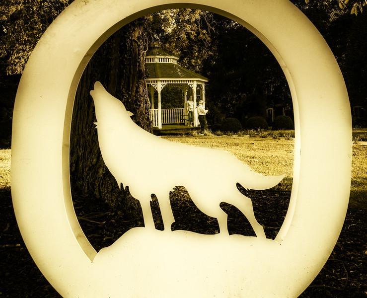Abingdon VA - OH a Wolf-1