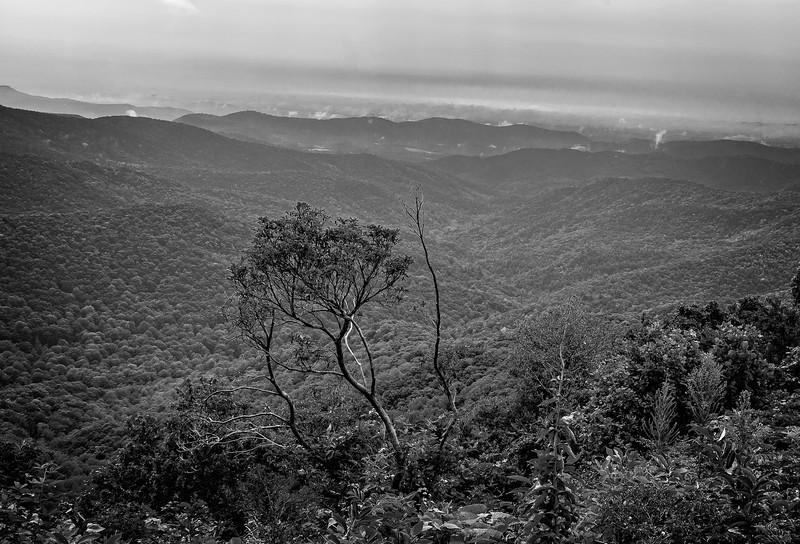 Blue Ridge Parkway - Bluff Mountain-0302