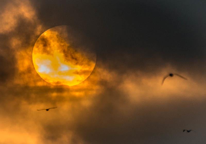 Sunrise & Pelicans-1