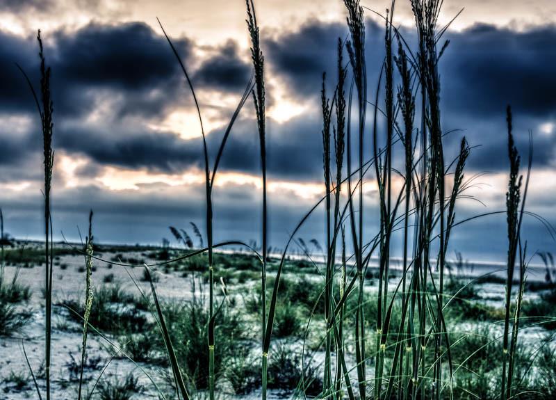 Beach Grass-1