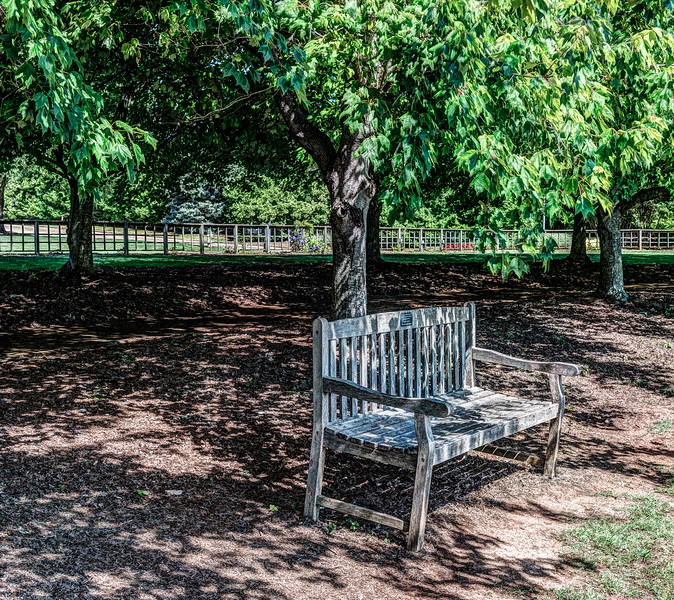 Bench under Trees-