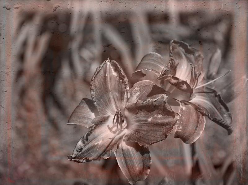Flowers-0219